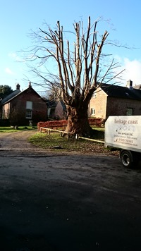 Tolpuddle Martys Tree after